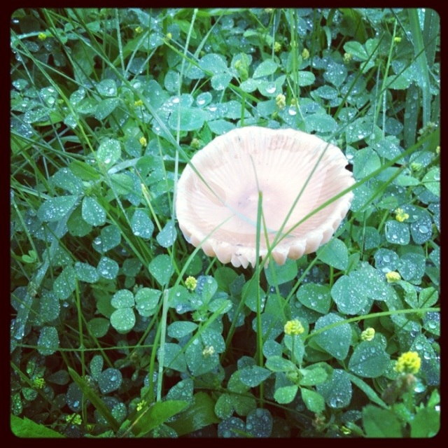 water filled wild mushroom cap in backyard