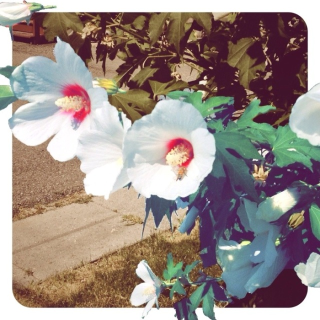 playing with photos of fresh flowers